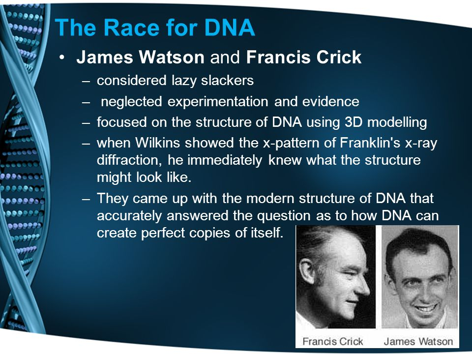 The Race for DNA James Watson and Francis Crick –considered lazy slackers – neglected experimentation and evidence –focused on the structure of DNA using 3D modelling –when Wilkins showed the x-pattern of Franklin s x-ray diffraction, he immediately knew what the structure might look like.