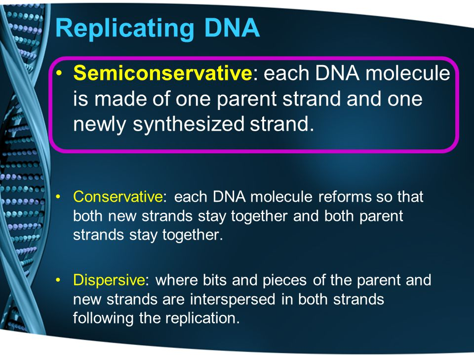 Replicating DNA Semiconservative: each DNA molecule is made of one parent strand and one newly synthesized strand.