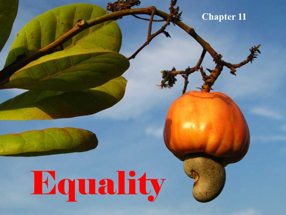 Equality Chapter 11