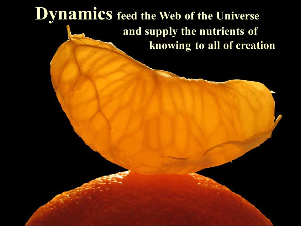 Dynamics feed the Web of the Universe and supply the nutrients of knowing to all of creation