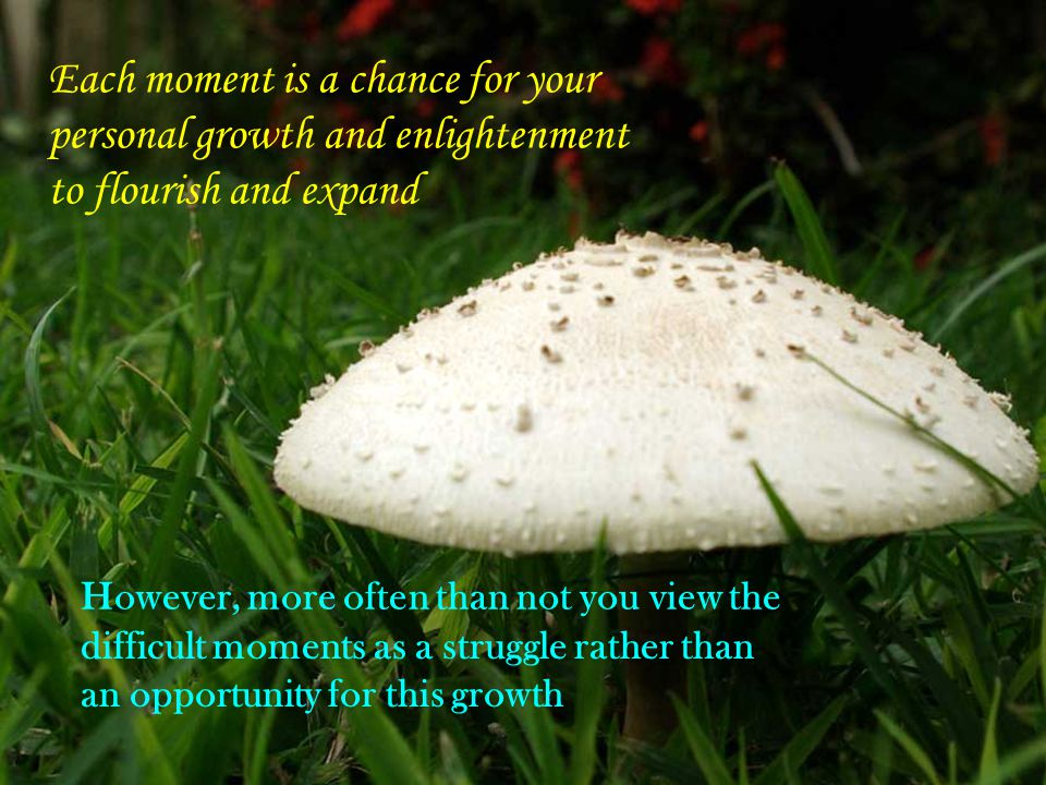Each moment is a chance for your personal growth and enlightenment to flourish and expand However, more often than not you view the difficult moments as a struggle rather than an opportunity for this growth