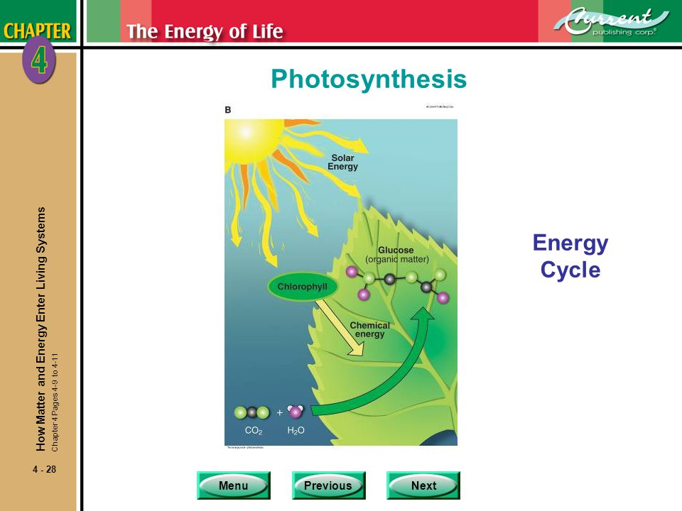 MenuPreviousNext 4 - 28 Photosynthesis Energy Cycle How Matter and Energy Enter Living Systems Chapter 4 Pages 4-9 to 4-11