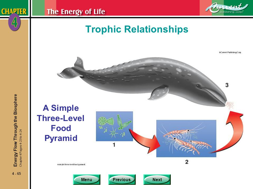 MenuPreviousNext 4 - 65 Trophic Relationships A Simple Three-Level Food Pyramid Energy Flow Through the Biosphere Chapter 4 Pages 4-23 to 4-24