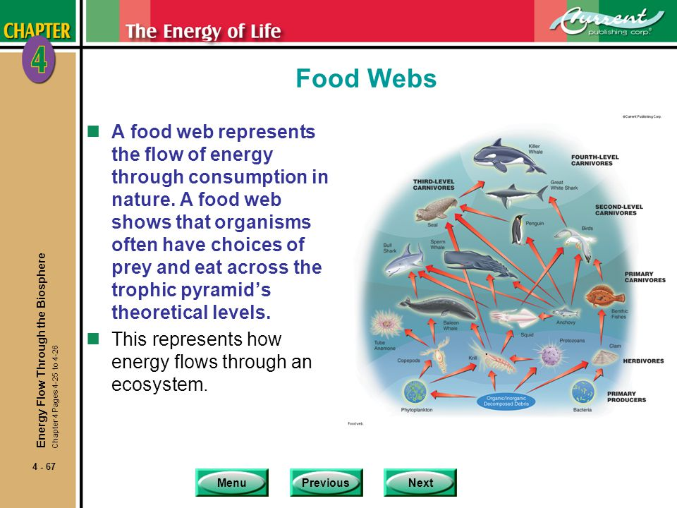 MenuPreviousNext 4 - 67 Food Webs nA food web represents the flow of energy through consumption in nature. A food web shows that organisms often have