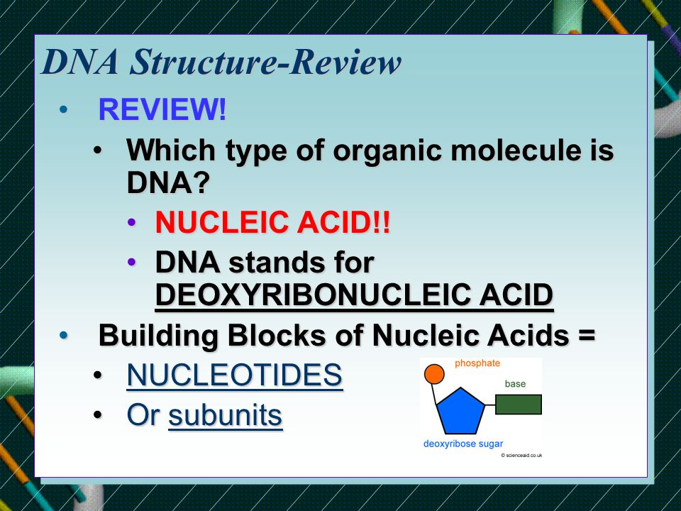 DNA Structure-Review REVIEW!REVIEW.