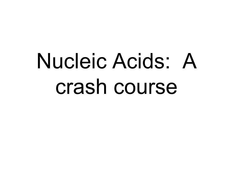 Nucleic Acids: A crash course