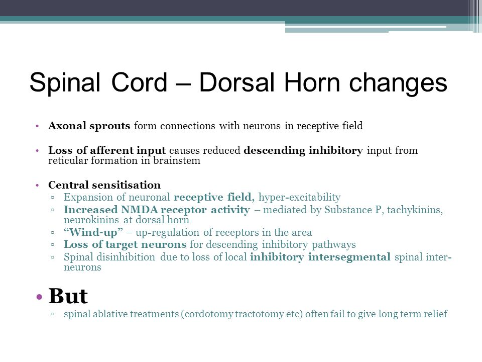 Spinal Cord – Dorsal Horn changes Axonal sprouts form connections with neurons in receptive field Loss of afferent input causes reduced descending inh