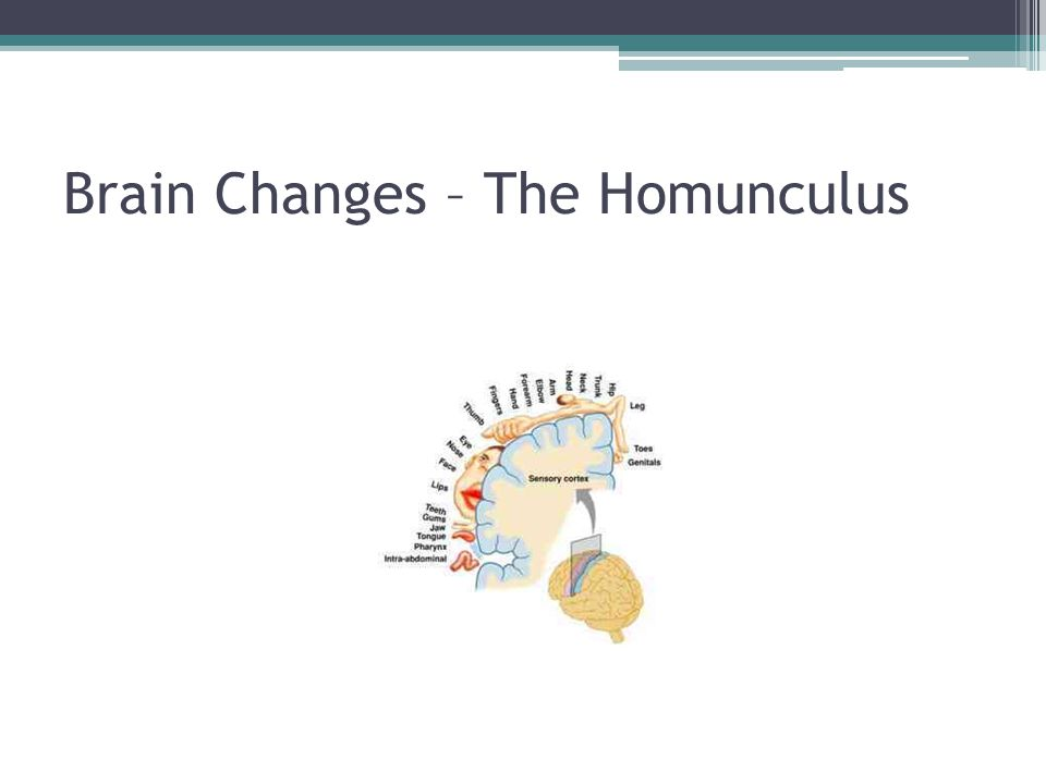 Brain Changes – The Homunculus