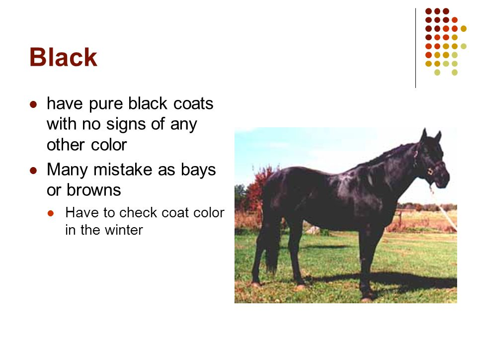 Gray have black skin with white or gray hair sometimes born black or brown, but coat gets lighter as they age