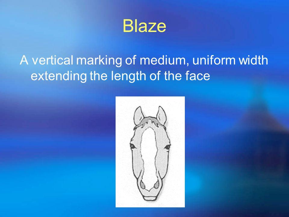 Blaze A vertical marking of medium, uniform width extending the length of the face