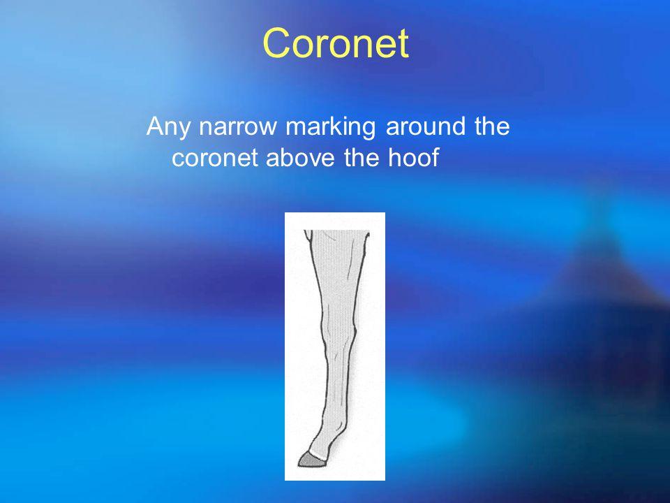 Coronet Any narrow marking around the coronet above the hoof