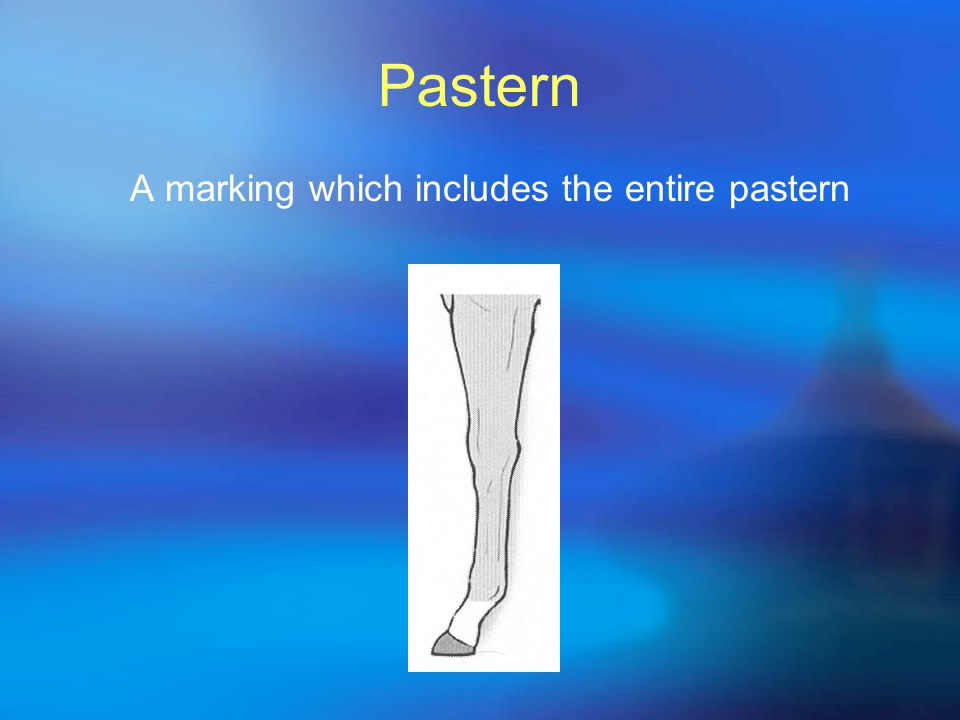 Pastern A marking which includes the entire pastern