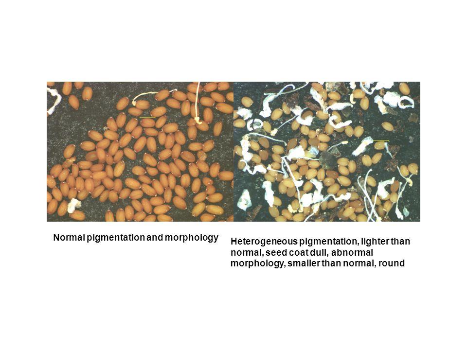 Normal pigmentation and morphology Heterogeneous pigmentation, lighter than normal, seed coat dull, abnormal morphology, smaller than normal, round