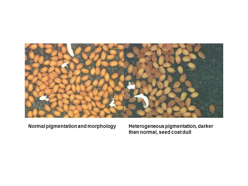 Normal pigmentation and morphologyHeterogeneous pigmentation, darker than normal, seed coat dull