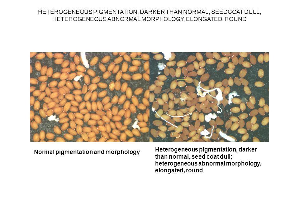 HETEROGENEOUS PIGMENTATION, DARKER THAN NORMAL, SEEDCOAT DULL, HETEROGENEOUS ABNORMAL MORPHOLOGY, ELONGATED, ROUND Normal pigmentation and morphology Heterogeneous pigmentation, darker than normal, seed coat dull; heterogeneous abnormal morphology, elongated, round