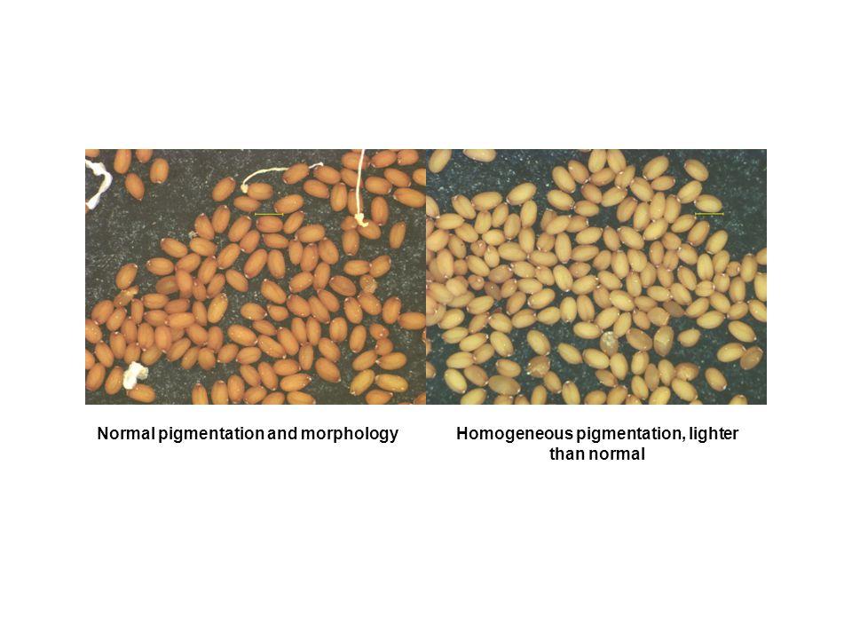 Normal pigmentation and morphologyHomogeneous pigmentation, lighter than normal