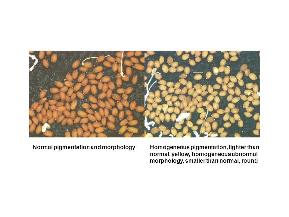 Normal pigmentation and morphologyHomogeneous pigmentation, lighter than normal, yellow, homogeneous abnormal morphology, smaller than normal, round