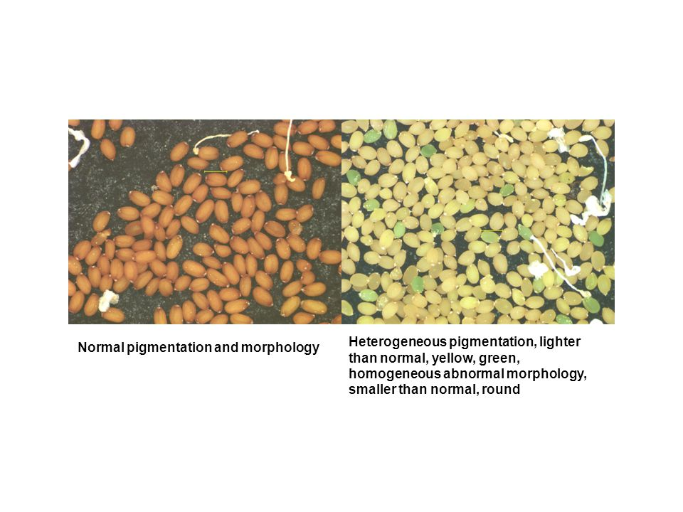 Normal pigmentation and morphology Heterogeneous pigmentation, lighter than normal, yellow, green, homogeneous abnormal morphology, smaller than normal, round
