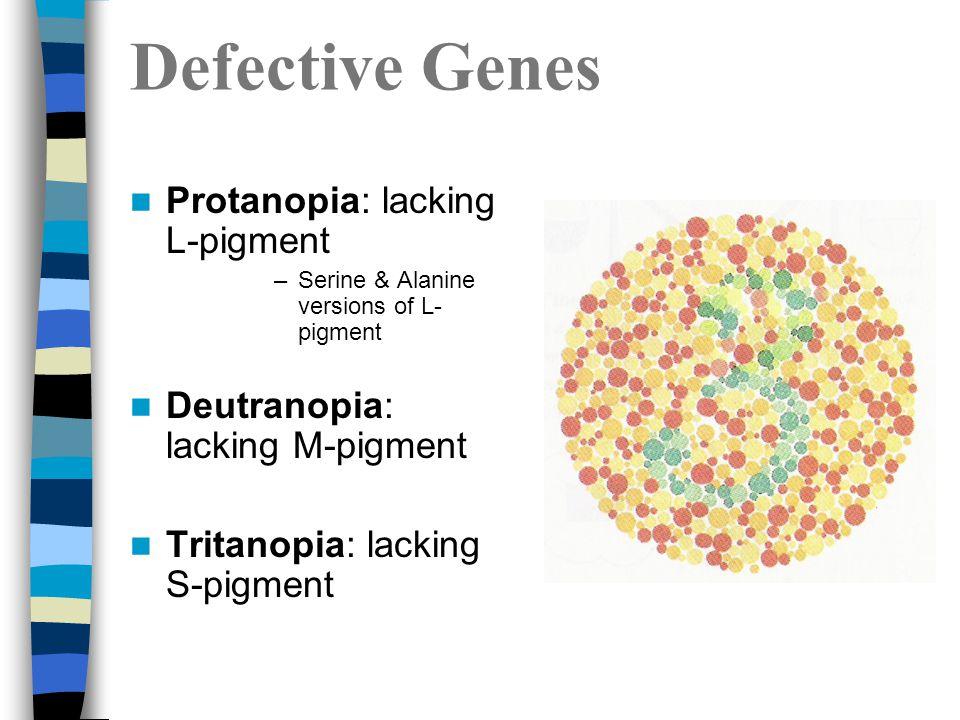 Defective Genes Protanopia: lacking L-pigment –Serine & Alanine versions of L- pigment Deutranopia: lacking M-pigment Tritanopia: lacking S-pigment