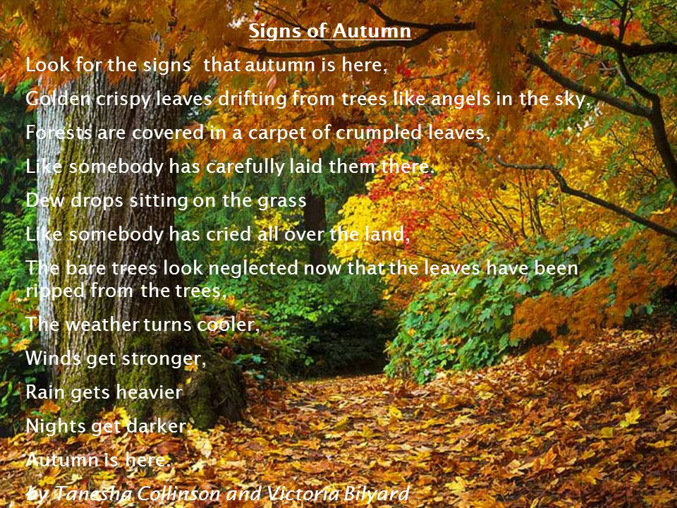 Signs of Autumn Look for the signs that autumn is here, Golden crispy leaves drifting from trees like angels in the sky, Forests are covered in a carpet of crumpled leaves, Like somebody has carefully laid them there.