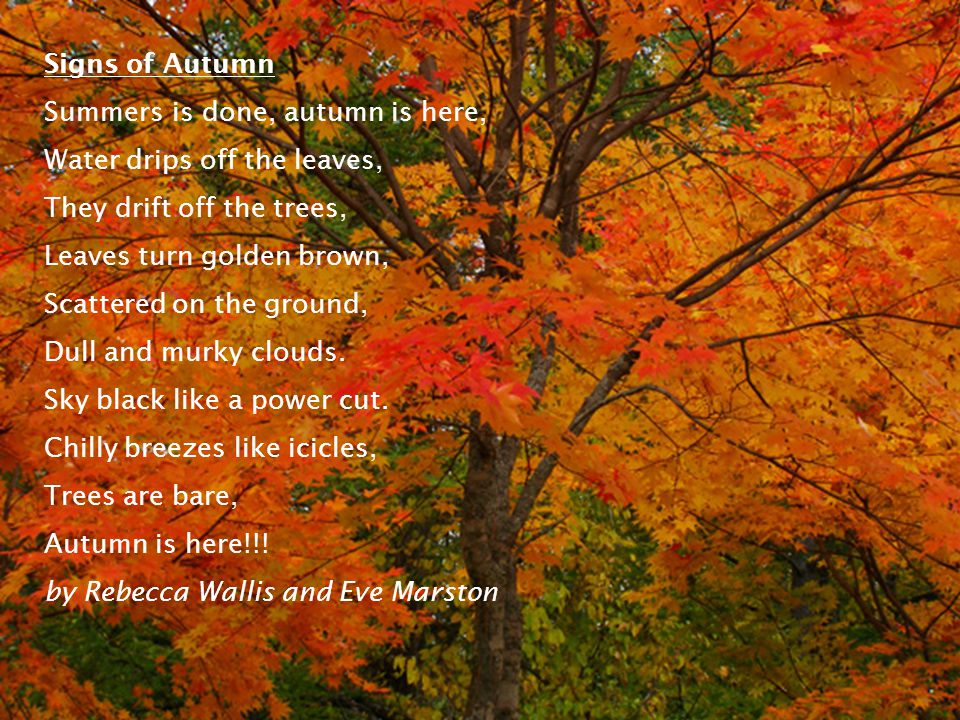 Signs of Autumn Summers is done, autumn is here, Water drips off the leaves, They drift off the trees, Leaves turn golden brown, Scattered on the ground, Dull and murky clouds.