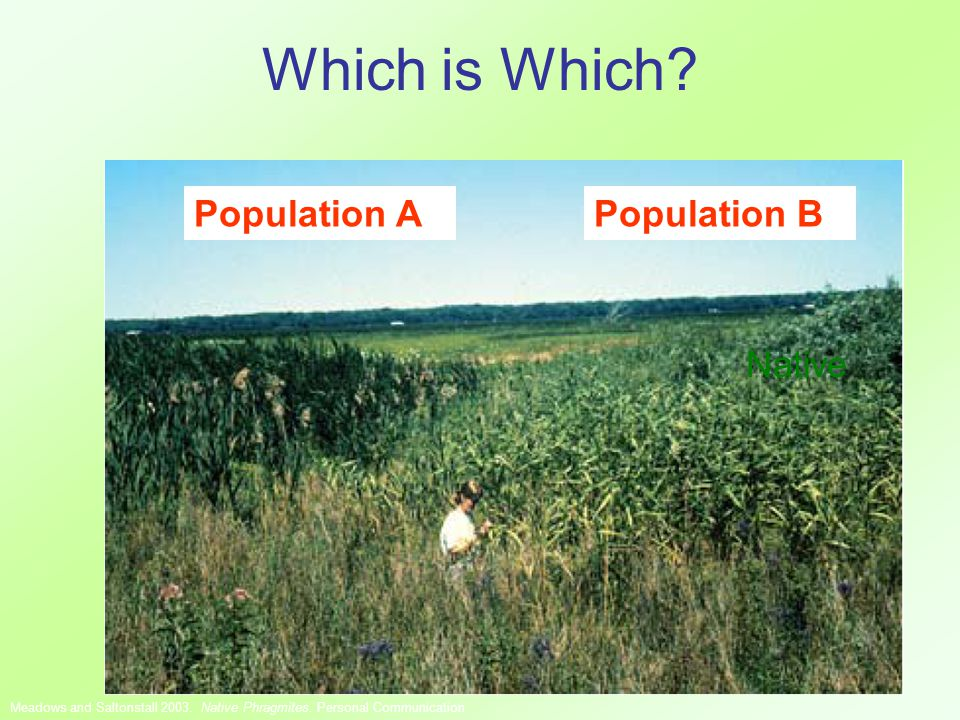 Which is Which. Native Population A Meadows and Saltonstall 2003.