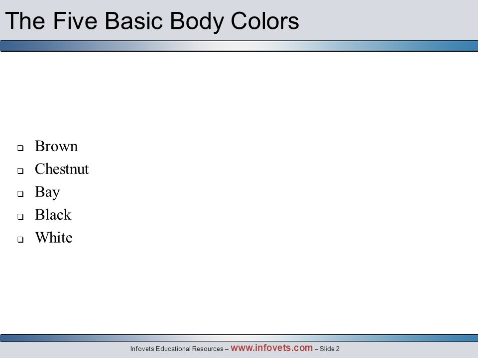 Infovets Educational Resources – www.infovets.com – Slide 2 The Five Basic Body Colors  Brown  Chestnut  Bay  Black  White