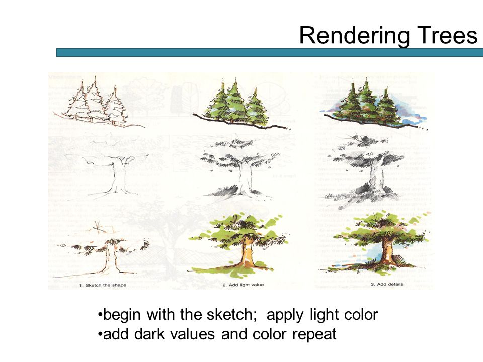 begin with the sketch; apply light color add dark values and color repeat Rendering Trees