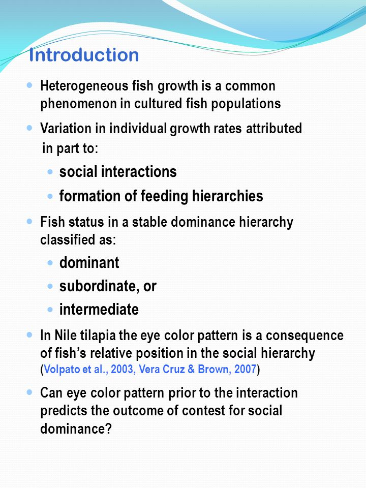 Introduction Heterogeneous fish growth is a common phenomenon in cultured fish populations Variation in individual growth rates attributed in part to: social interactions formation of feeding hierarchies Fish status in a stable dominance hierarchy classified as: dominant subordinate, or intermediate In Nile tilapia the eye color pattern is a consequence of fish's relative position in the social hierarchy (Volpato et al., 2003, Vera Cruz & Brown, 2007) Can eye color pattern prior to the interaction predicts the outcome of contest for social dominance