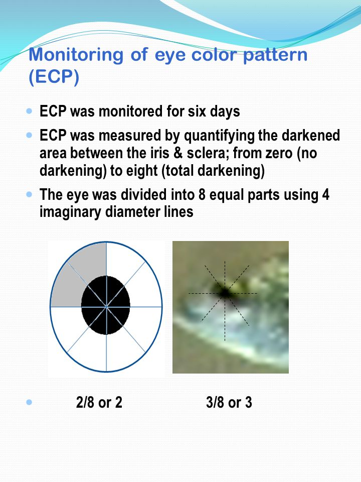 Monitoring of eye color pattern (ECP) ECP was monitored for six days ECP was measured by quantifying the darkened area between the iris & sclera; from zero (no darkening) to eight (total darkening) The eye was divided into 8 equal parts using 4 imaginary diameter lines 2/8 or 2 3/8 or 3