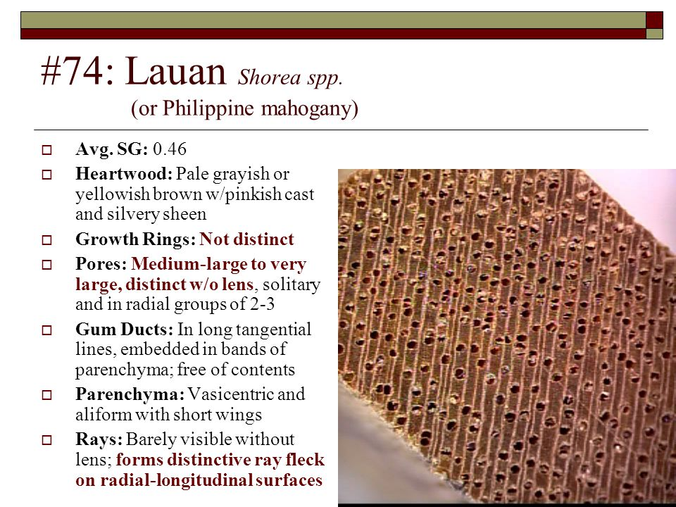 #74: Lauan Shorea spp. (or Philippine mahogany)  Avg. SG: 0.46  Heartwood: Pale grayish or yellowish brown w/pinkish cast and silvery sheen  Growth