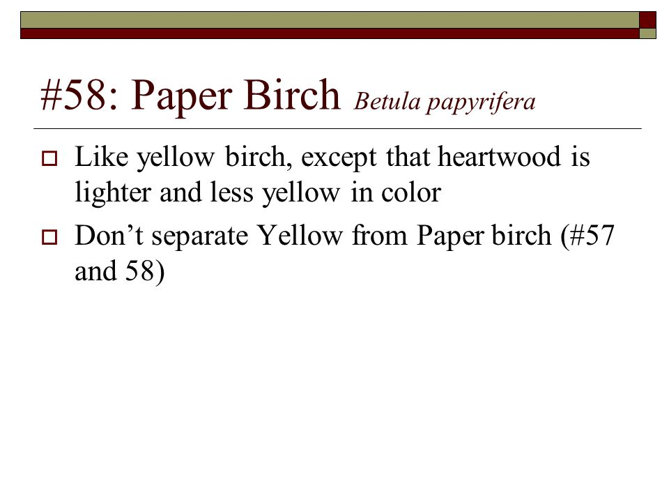 #58: Paper Birch Betula papyrifera  Like yellow birch, except that heartwood is lighter and less yellow in color  Don't separate Yellow from Paper b