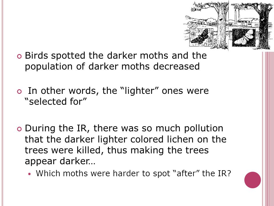 Birds spotted the darker moths and the population of darker moths decreased In other words, the lighter ones were selected for During the IR, there was so much pollution that the darker lighter colored lichen on the trees were killed, thus making the trees appear darker… Which moths were harder to spot after the IR?