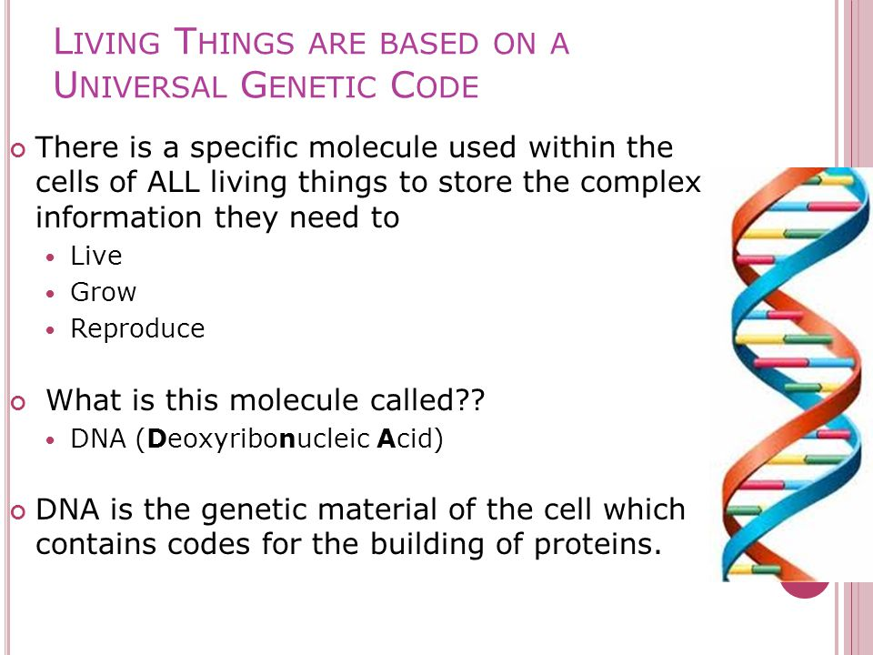 L IVING T HINGS ARE BASED ON A U NIVERSAL G ENETIC C ODE There is a specific molecule used within the cells of ALL living things to store the complex information they need to Live Grow Reproduce What is this molecule called .