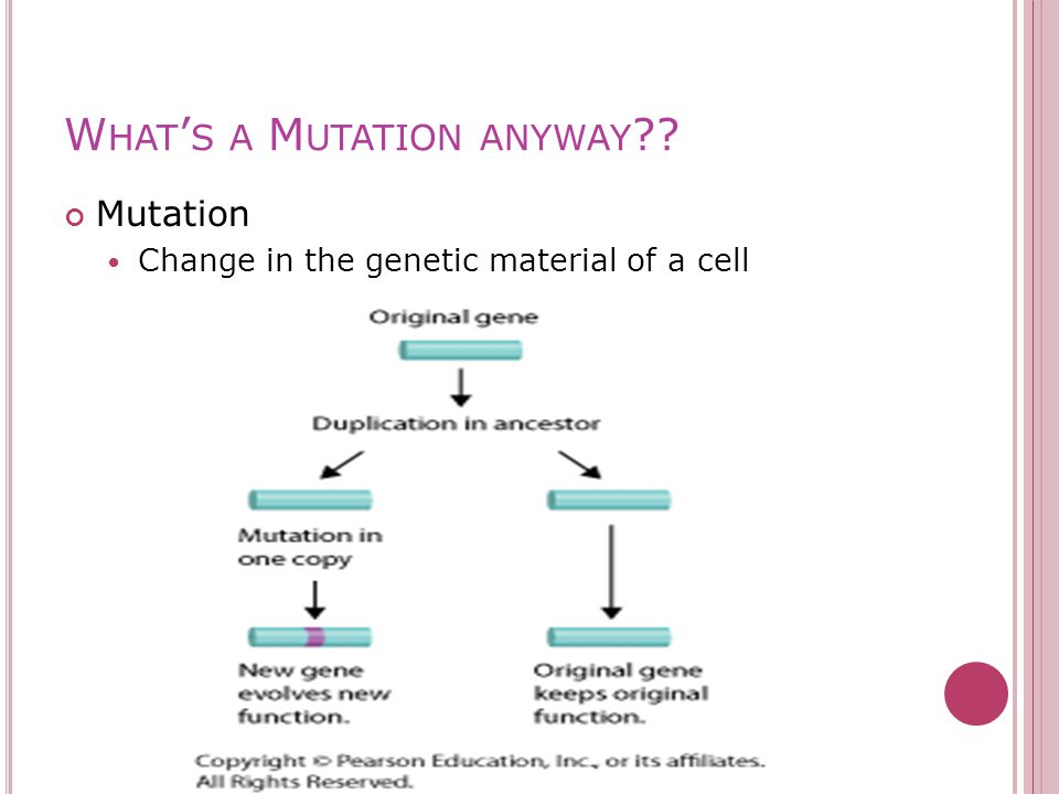 W HAT ' S A M UTATION ANYWAY ?? Mutation Change in the genetic material of a cell
