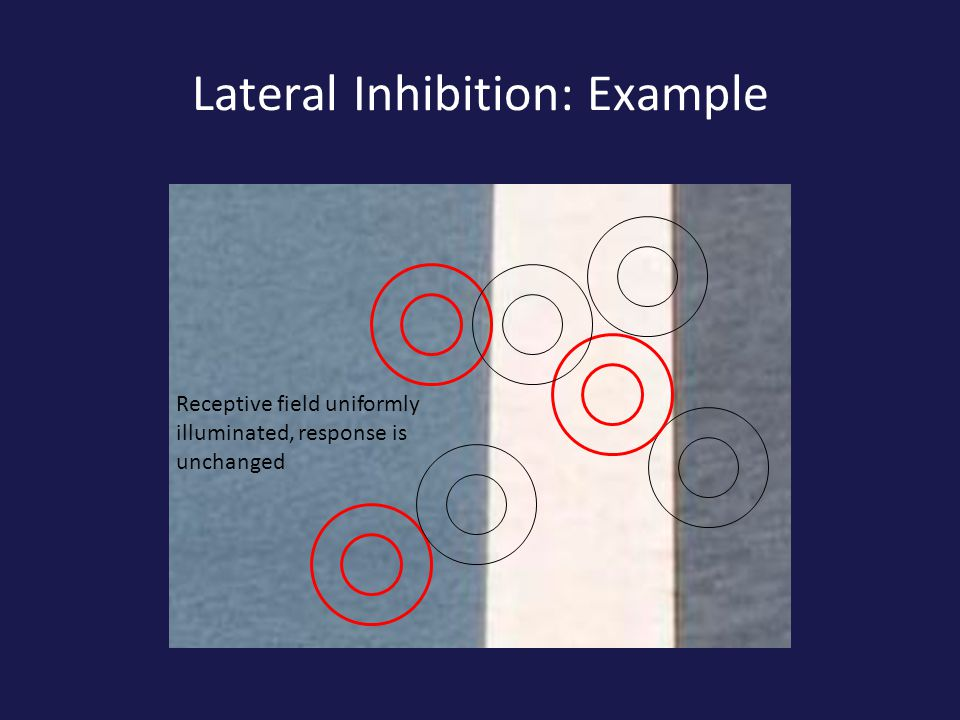 Lateral Inhibition: Example Receptive field uniformly illuminated, response is unchanged