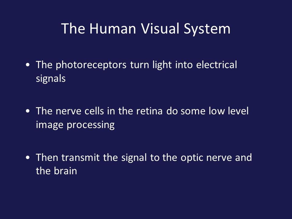 The Human Visual System The photoreceptors turn light into electrical signals The nerve cells in the retina do some low level image processing Then tr