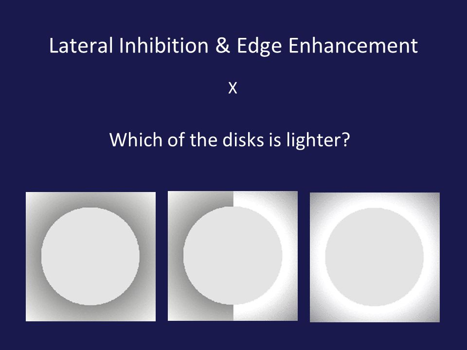 Lateral Inhibition & Edge Enhancement Which of the disks is lighter X