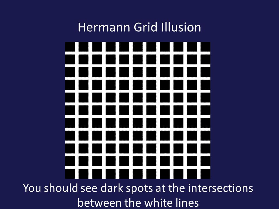 Hermann Grid Illusion You should see dark spots at the intersections between the white lines