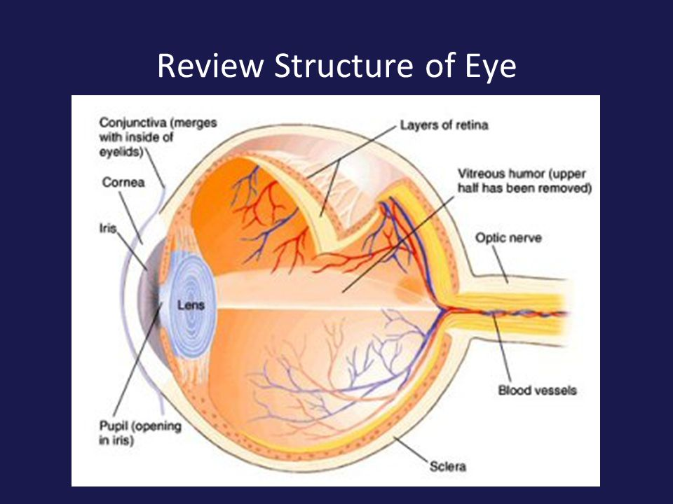 Review Structure of Eye