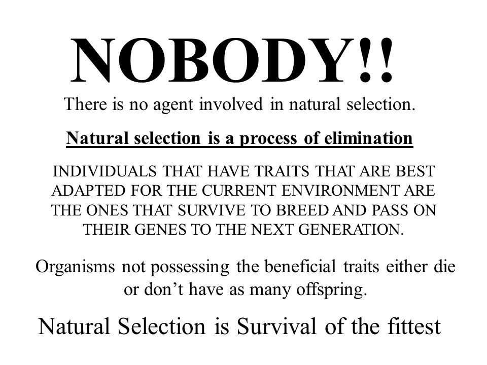 INDIVIDUALS THAT HAVE TRAITS THAT ARE BEST ADAPTED FOR THE CURRENT ENVIRONMENT ARE THE ONES THAT SURVIVE TO BREED AND PASS ON THEIR GENES TO THE NEXT GENERATION.
