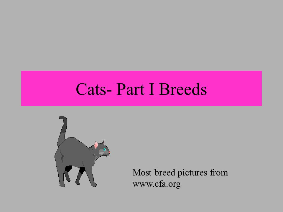 Cat breeds Differ in color and color patterns, length of hair, shape of ears, shape and color of eyes, head shape, body conformation, size, and disposition