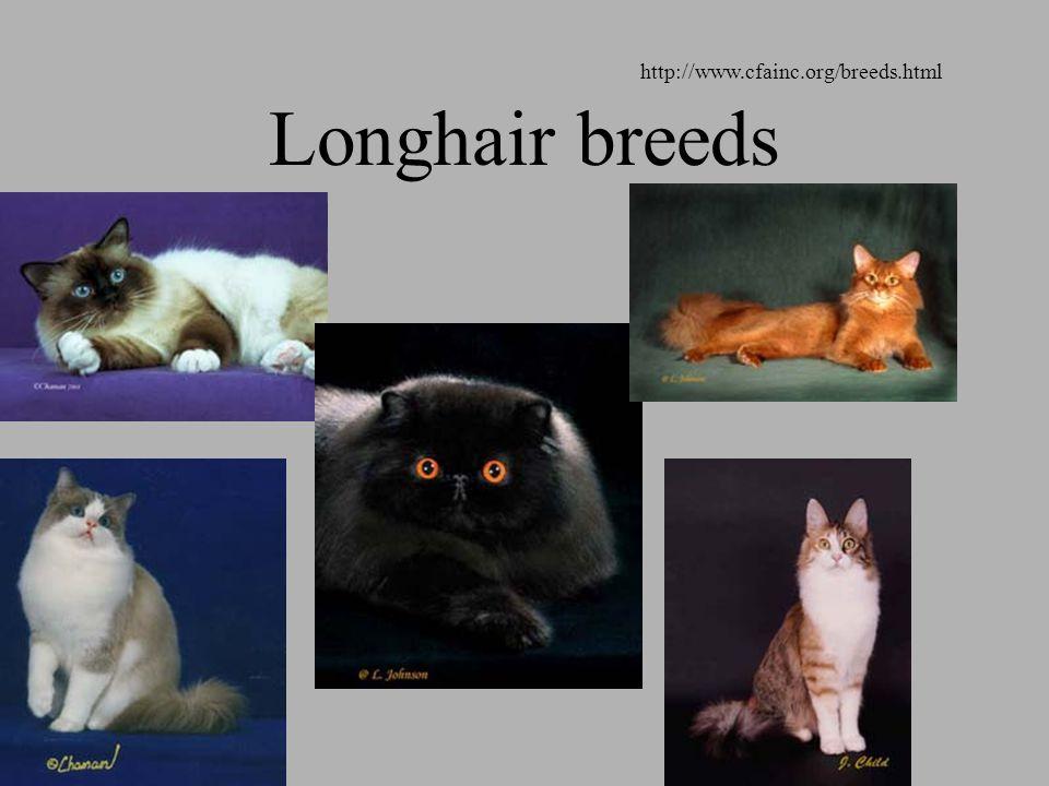 Longhair breeds http://www.cfainc.org/breeds.html