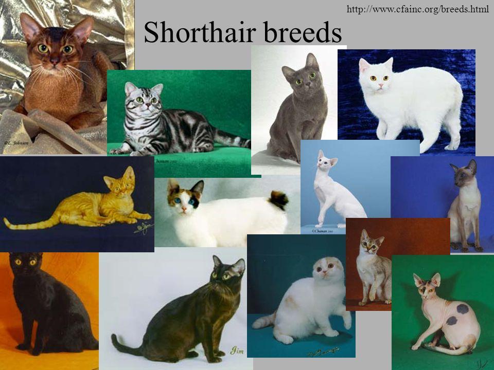 Shorthair breeds http://www.cfainc.org/breeds.html