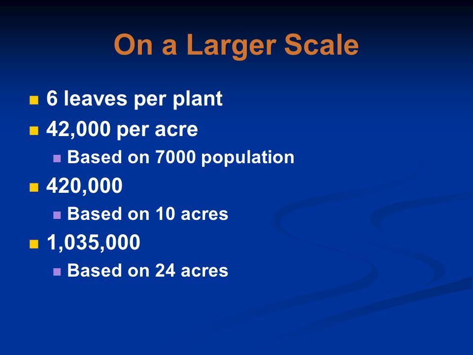On a Larger Scale 6 leaves per plant 42,000 per acre Based on 7000 population 420,000 Based on 10 acres 1,035,000 Based on 24 acres