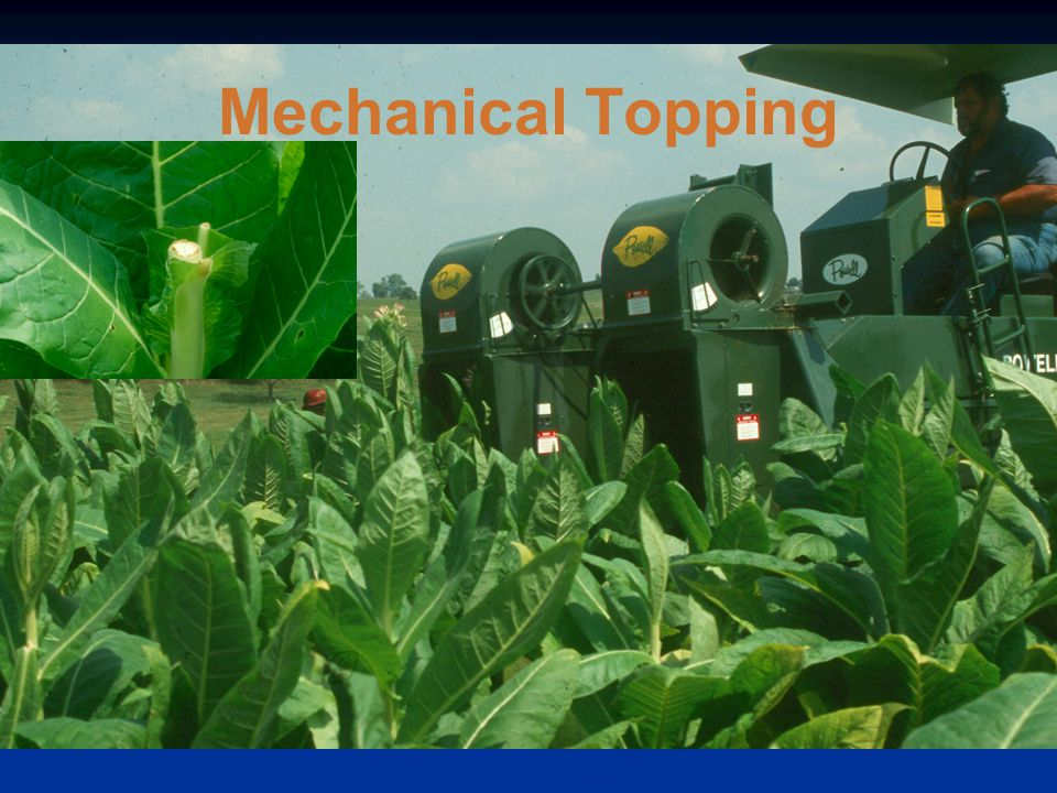 Mechanical Topping