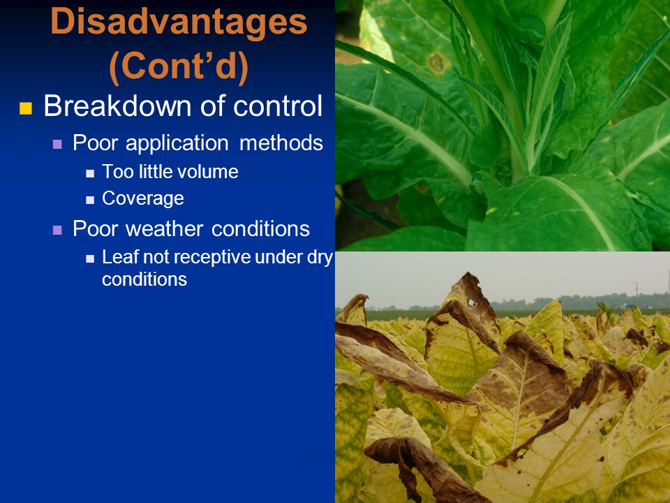 Disadvantages (Cont'd) Breakdown of control Poor application methods Too little volume Coverage Poor weather conditions Leaf not receptive under dry conditions