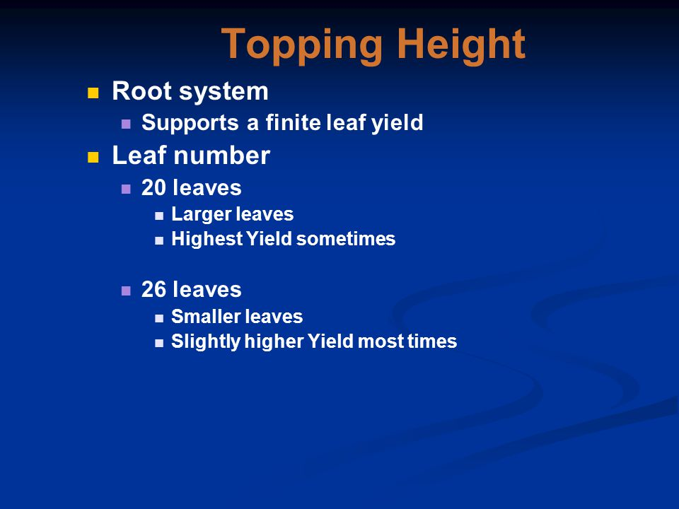 Topping Height Root system Supports a finite leaf yield Leaf number 20 leaves Larger leaves Highest Yield sometimes 26 leaves Smaller leaves Slightly