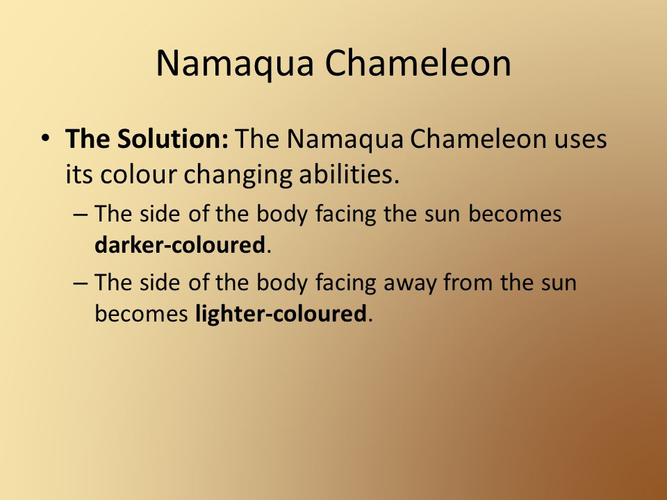 Namaqua Chameleon The Solution: The Namaqua Chameleon uses its colour changing abilities.