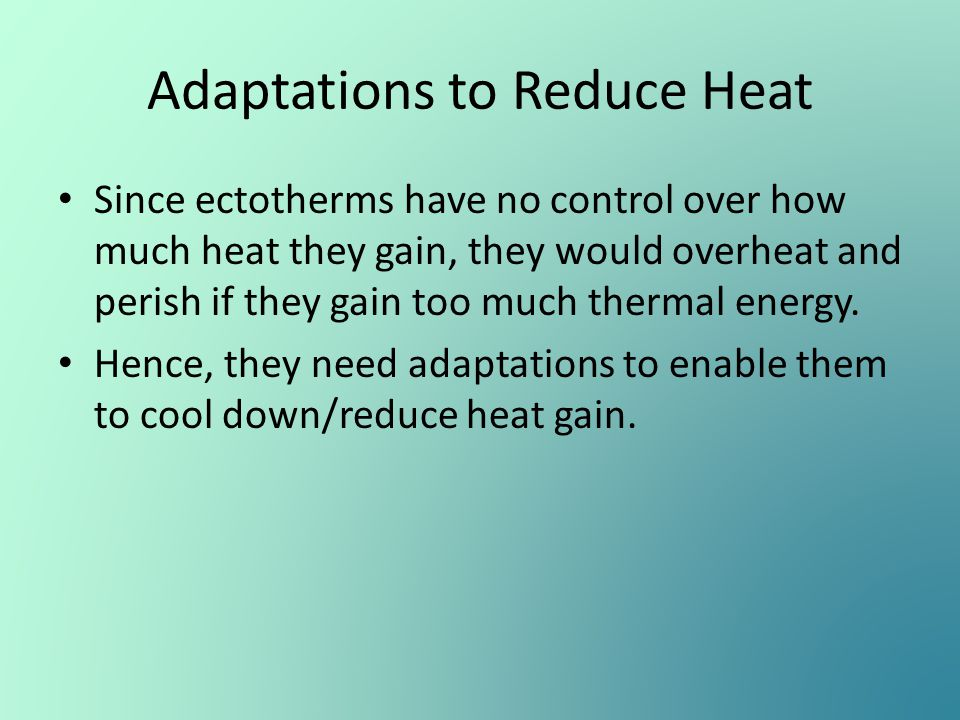 Adaptations to Reduce Heat Since ectotherms have no control over how much heat they gain, they would overheat and perish if they gain too much thermal